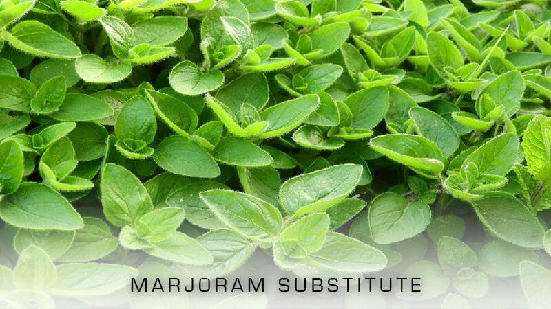Best Marjoram Substitute
