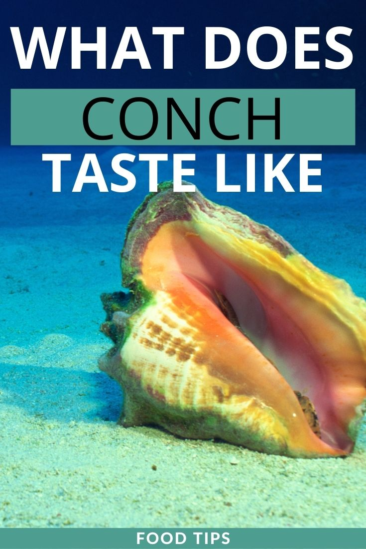 what does conch taste like