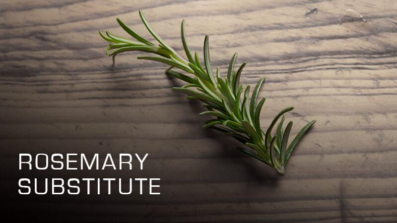 Rosemary Substitute