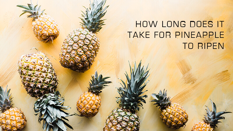 How long does it take for a Pineapple to Ripen