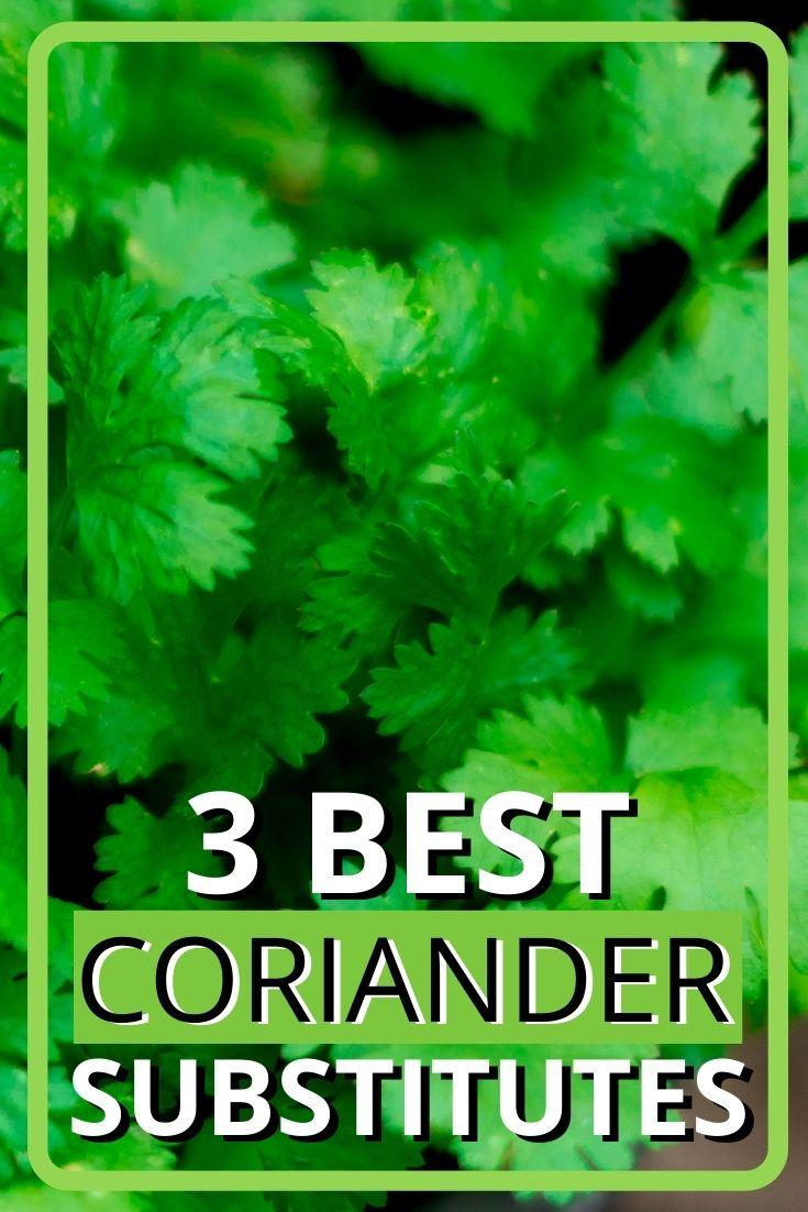 3 best coriander substitutes