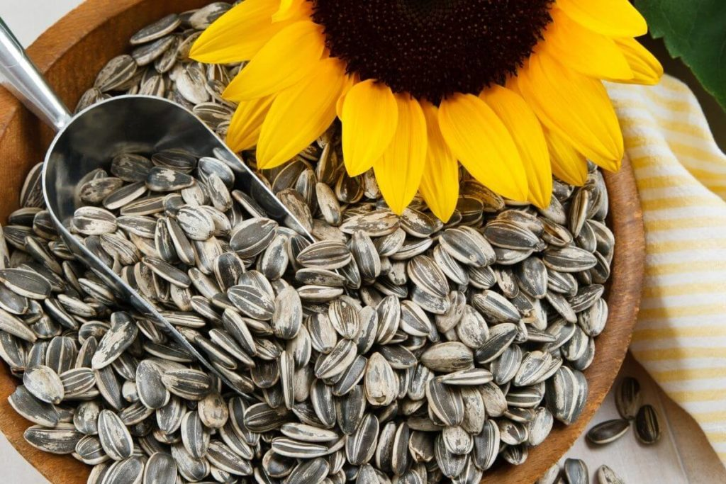 How to Extend the Shelf Life of Sunflower Seeds