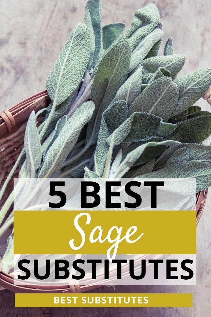 Best Sage Substitutes