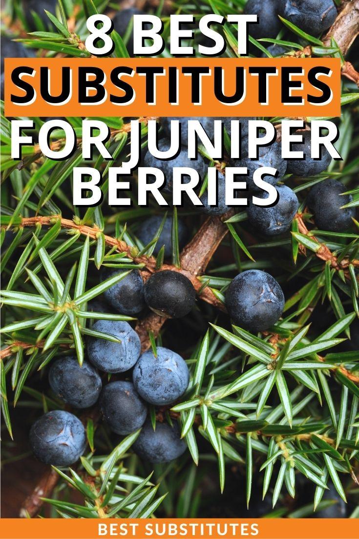 Best Substitutes for Juniper Berries