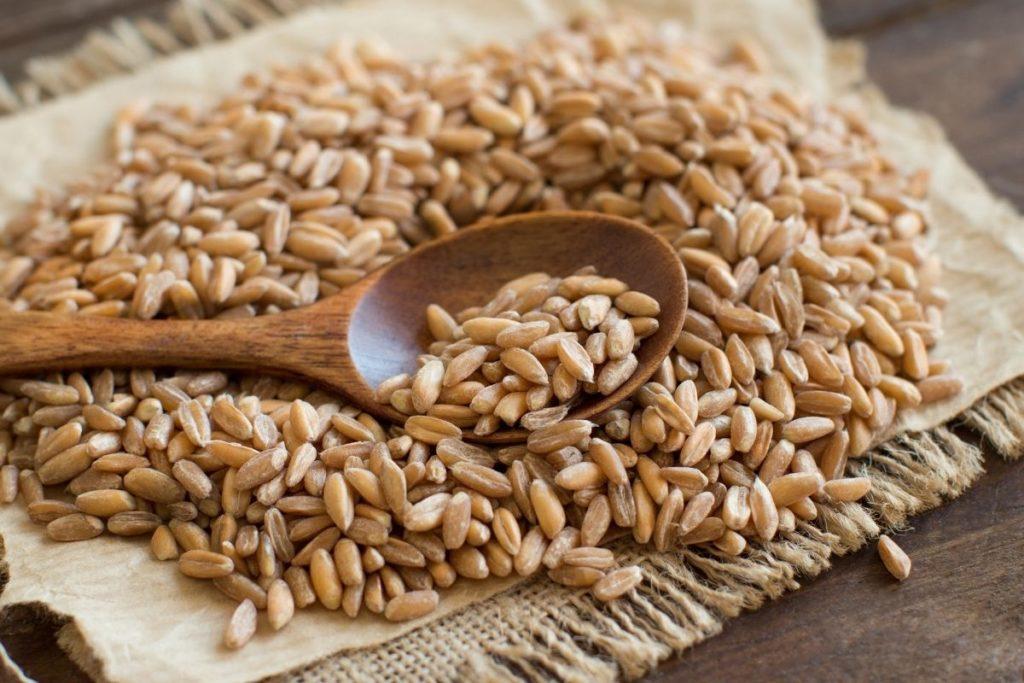 Farro -Barley Substitutes