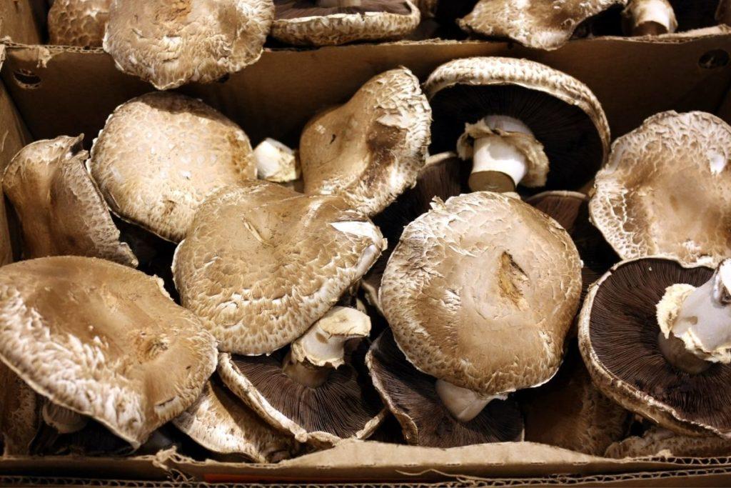Portobello Mushrooms - Shiitake Mushroom Substitutes