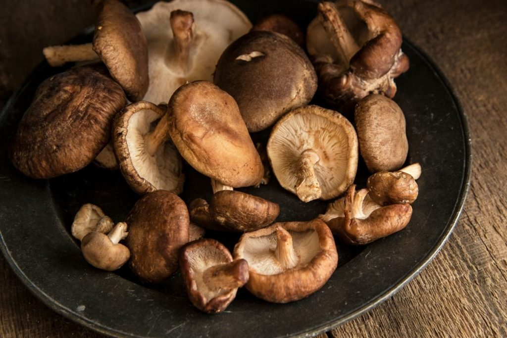 Shiitake Mushroom Substitutes