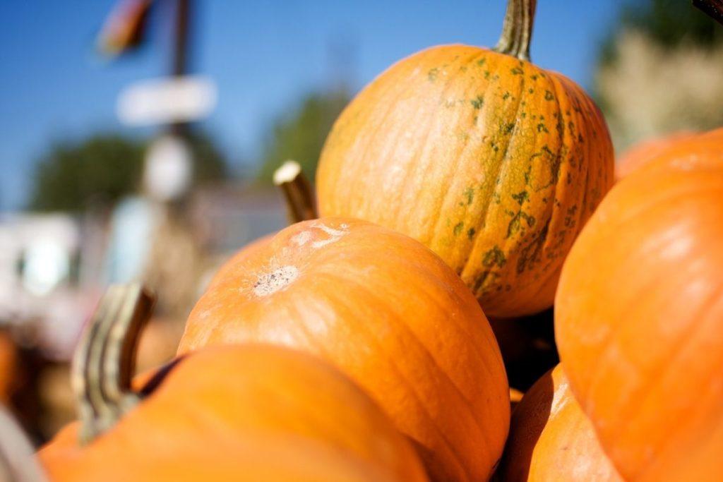 Sugar Pumpkin - Butternut Squash Alternatives