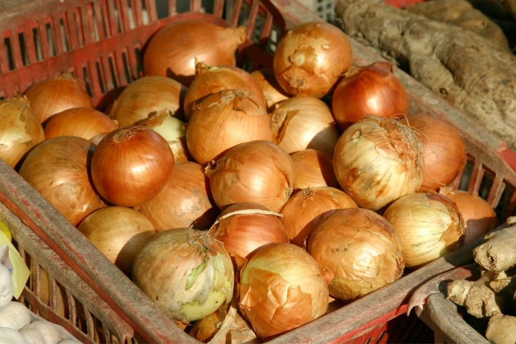 Brown Onions - Scallion Substitute
