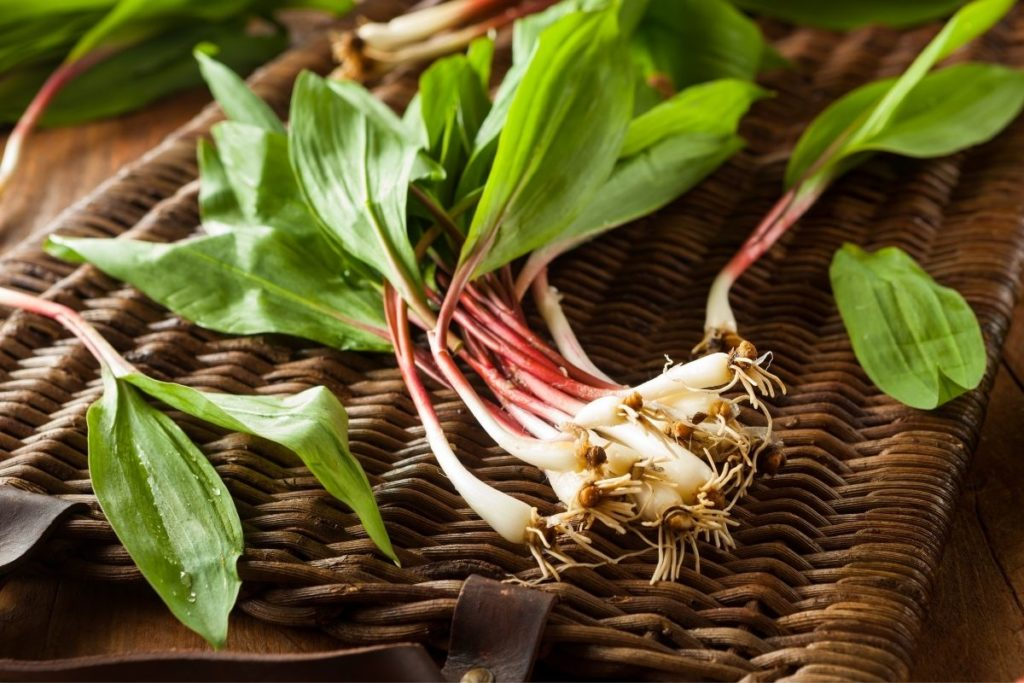 Ramps - Green Onion Substitutes