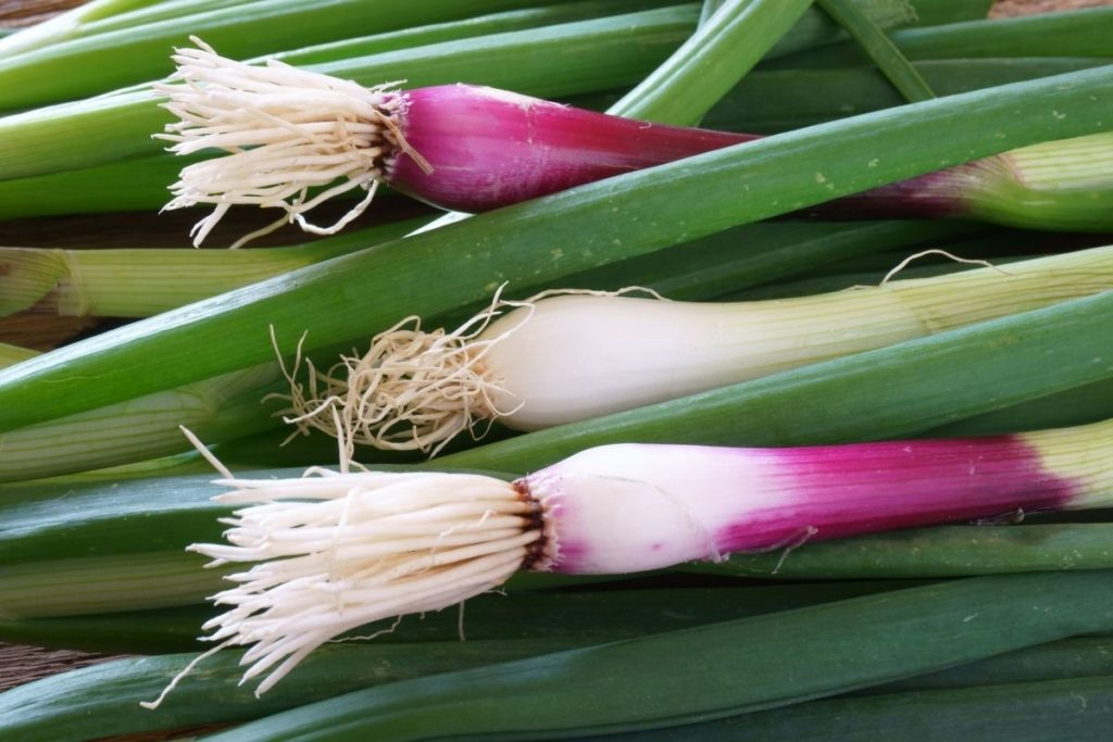 Red Spring Onions - Green Onion Substitutes