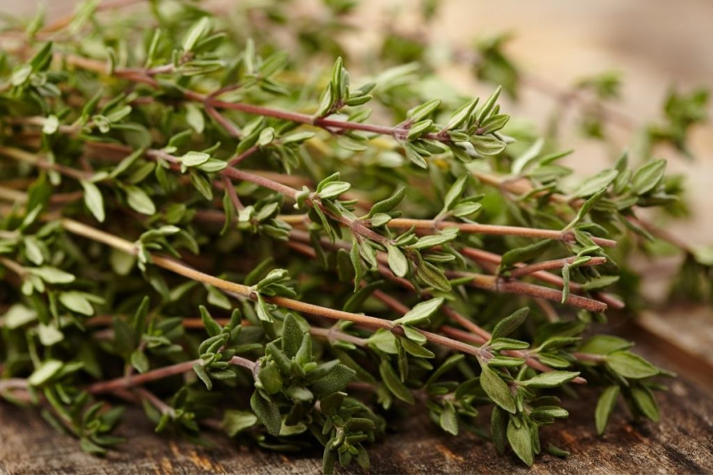 Thyme - Bay Leaf Substitutes