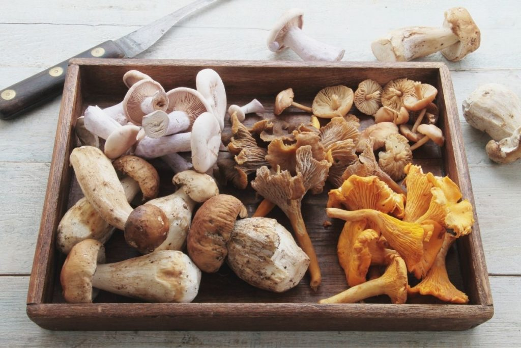 How To Tell If Mushrooms Are Bad
